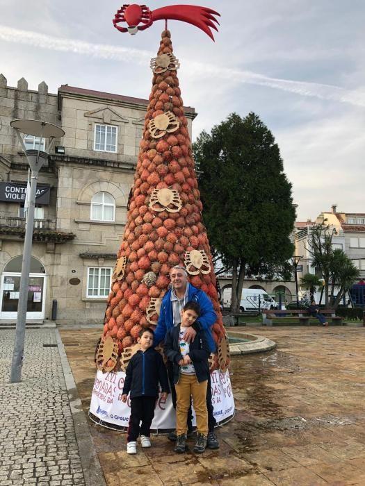 El árbol de O Grove, imbatible en originalidad // Muñiz