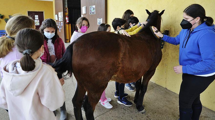 Los niños que quieren susurrar a los caballos