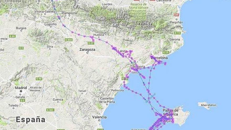 Mallorcas Möwen fliegen für einen Snack auch mal ins Baskenland