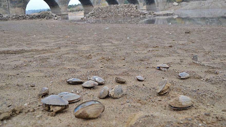Depuración gansa y ríos muertos