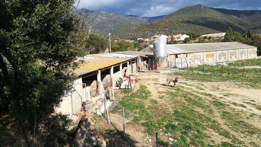 Un jutjat ordena a l'Ajuntament de Cantallops que tanqui una granja per falta de titulació