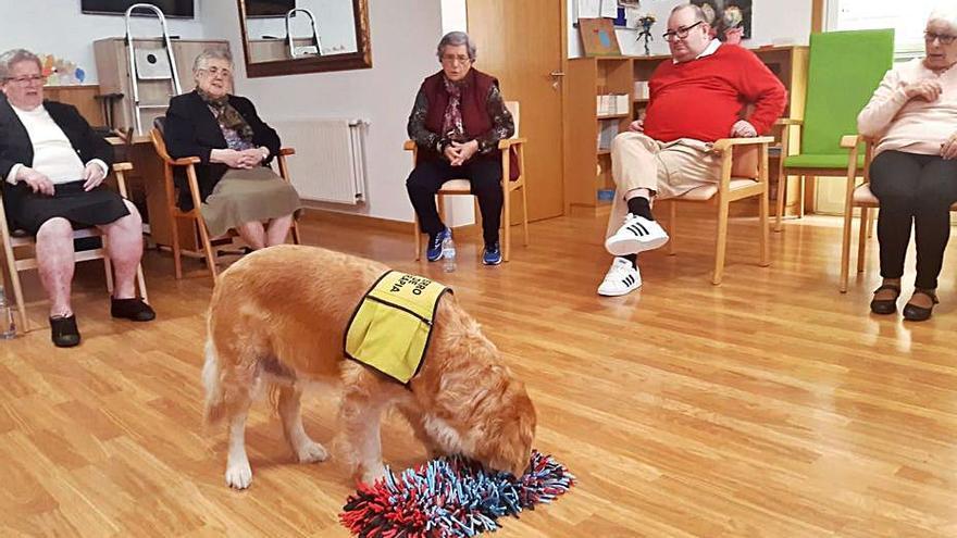 Una alfombra de regalo para la perra de terapia de As Dores