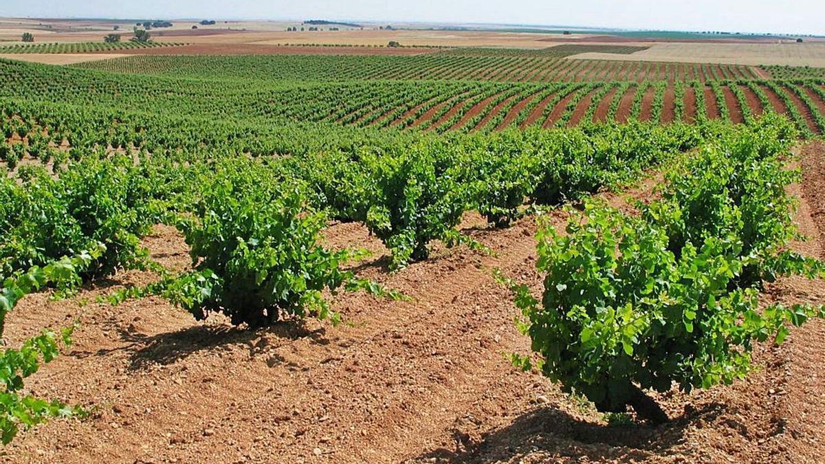 Viñedos situados en la provincia de Zamora.