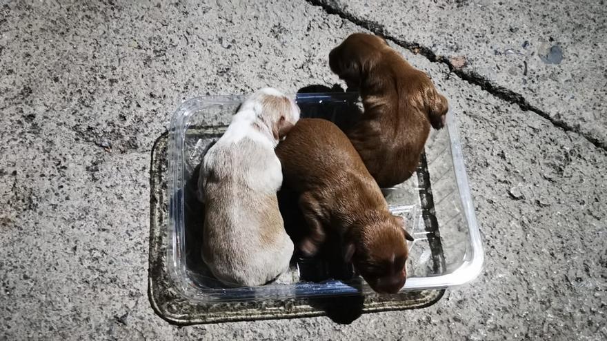 Se busca a quien tiró tres cachorros en un contenedor de San Antonio de Benagéber
