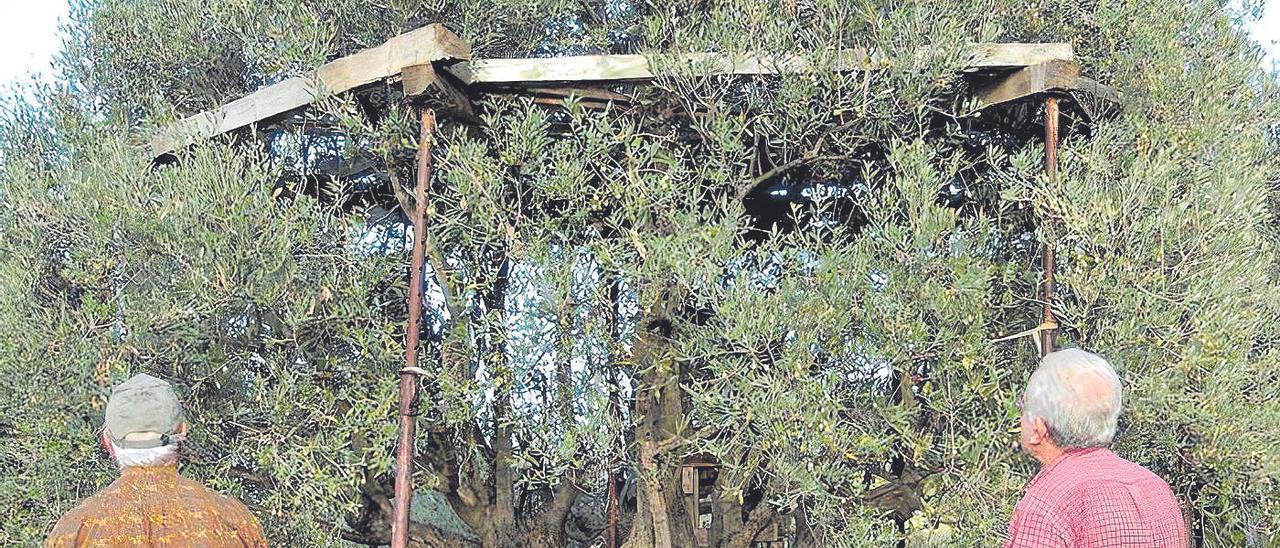 Agricultura mantiene el veto a las pruebas del cesto malla en el 'parany' cinco años después