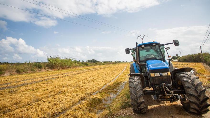 La prohibición de plaguicidas de la UE deja al sector arrocero sin productos eficaces contra los hongos