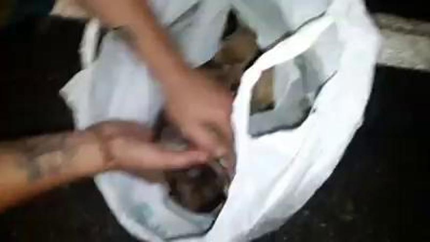 La Policía Local de Lena investiga el abandono de los cachorros arrojados a un terraplén