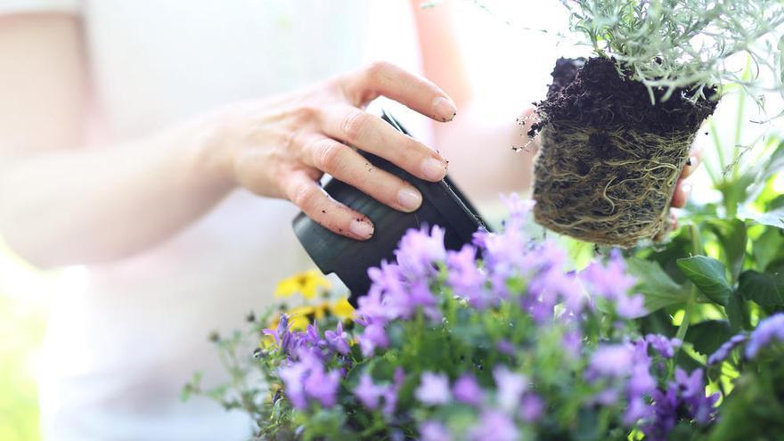 Los consejos para cuidar tus plantas y convertirte en un jardinero profesional