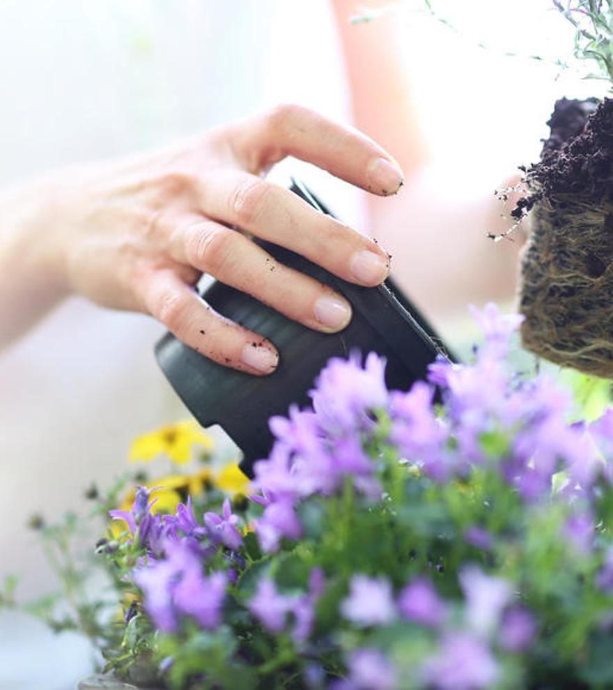 El remedio natural, ecológico y barato para cuidar tus plantas