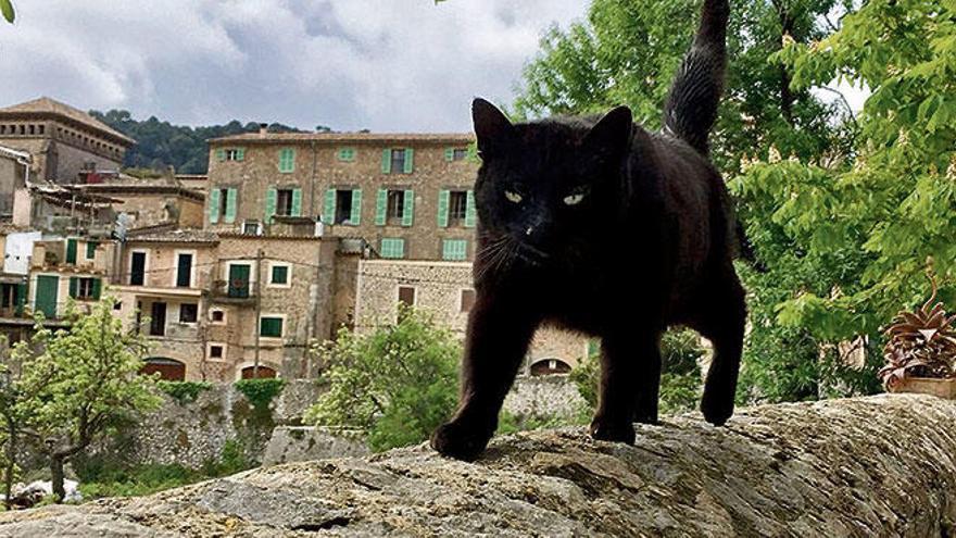 Corona lässt Straßenkatzen-Population auf Mallorca ansteigen