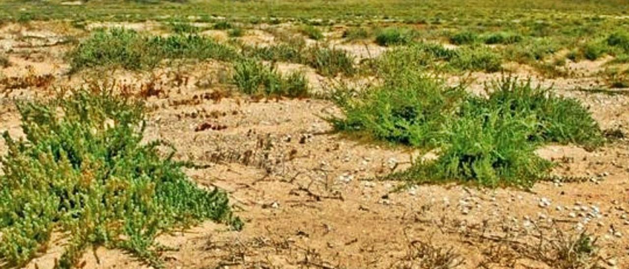 Imagen publicada por Ecologistas en Acción sobre la zona de jable.     JULIO GONZÁLEZ