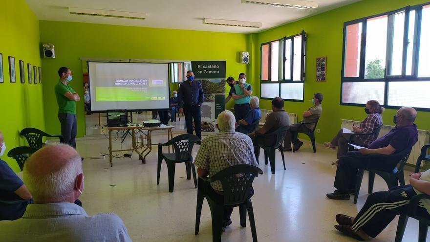 La Diputación destinará más de 300.000 euros al fomento de la castañicultura en Zamora