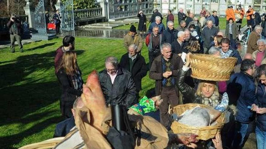 Los valgueses y sus santos regresan de Vilar a Cordeiro cargados con cestos de lacones