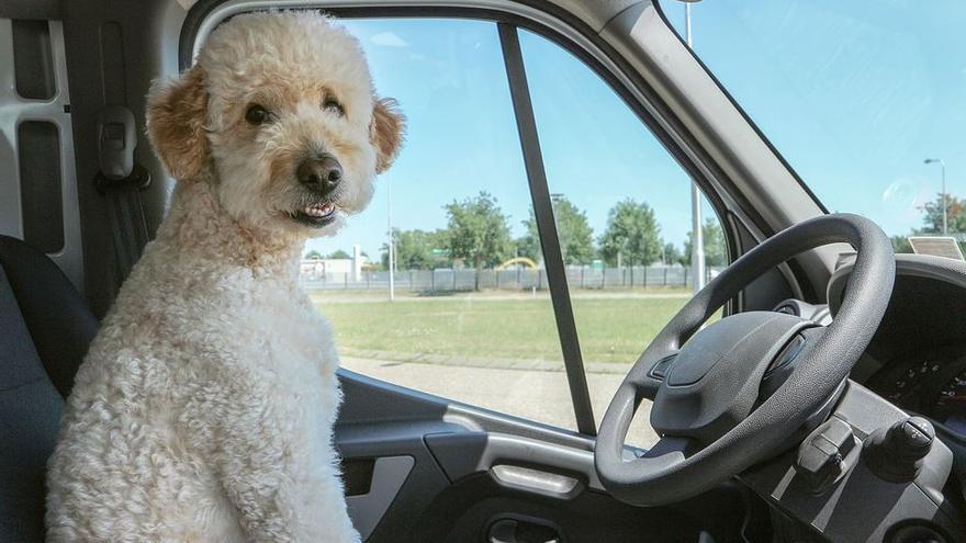 Consells per a viatjar amb la teva mascota