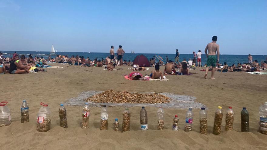 Sammeln Sie Zigarettenstummel an den Stränden auf Mallorca!
