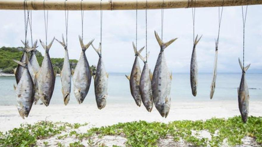 ¿Es seguro comer pescado?