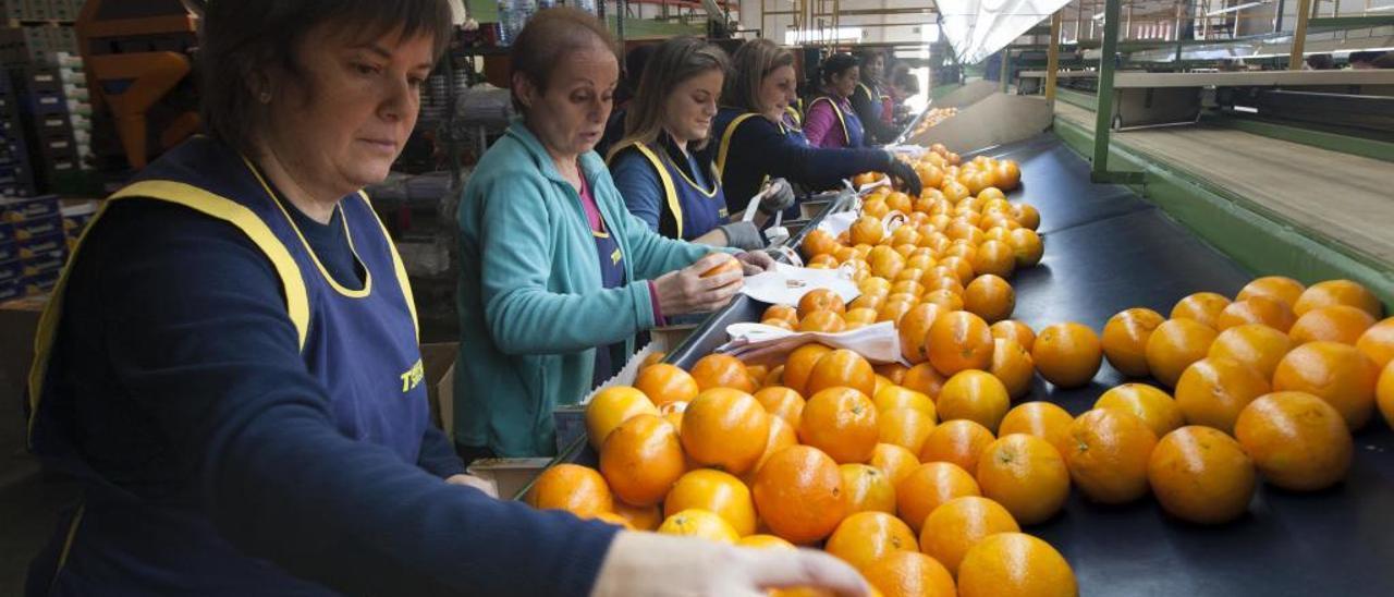 Trabajadoras de unos almacenes de la comarca