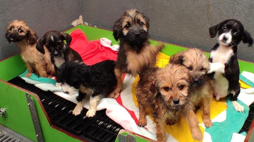 Adoptados en tres días tras ser rescatados en el monte