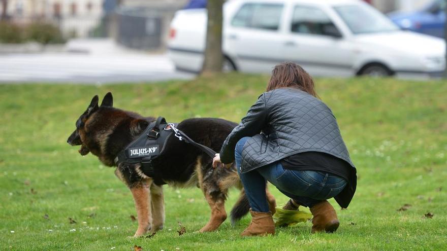 Berry, el perro policía de Pontevedra