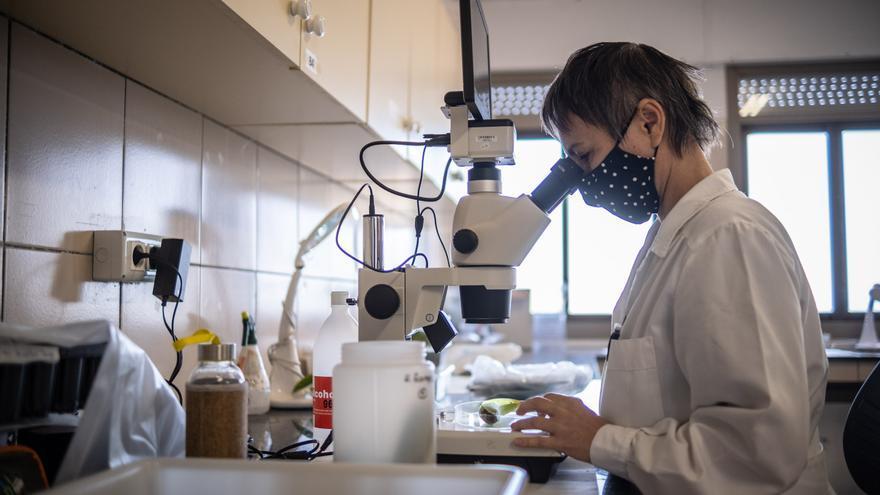 Canarias apuesta por triplicar la partida presupuestaria que destina a su ciencia