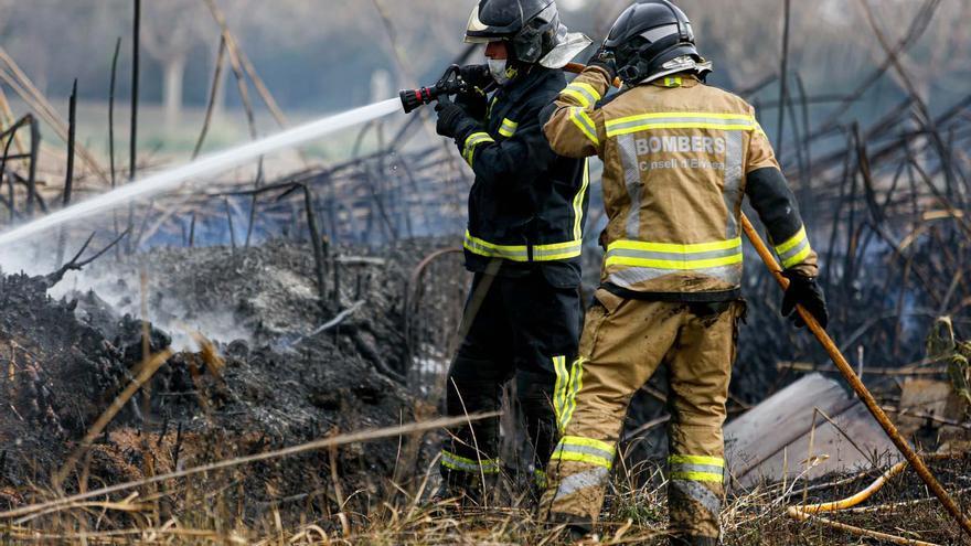 Arden 1500 metros cuadrados de cañaveral en Ibiza