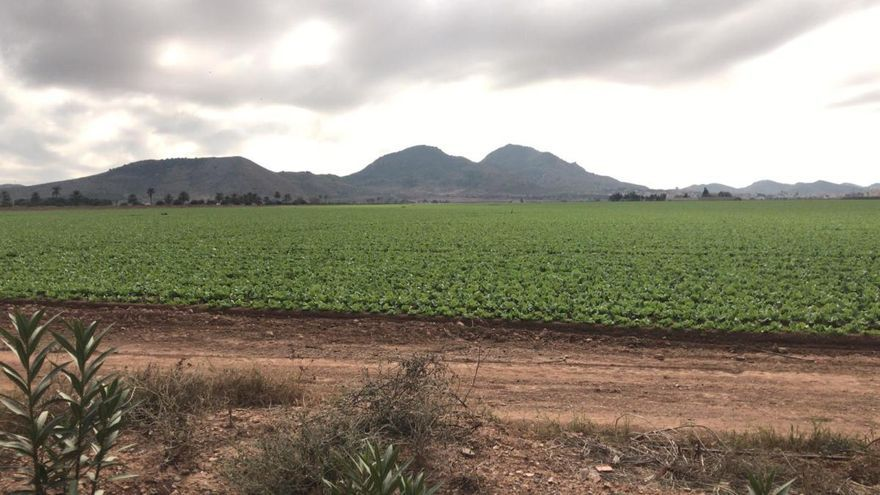 Denuncian a tres fincas agrícolas de Cartagena por incumplir la ley del Mar Menor