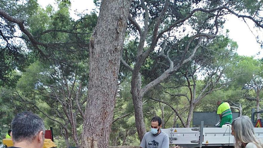 Cort evalúa la salud de los árboles en  la zona del nuevo parque en Bellver