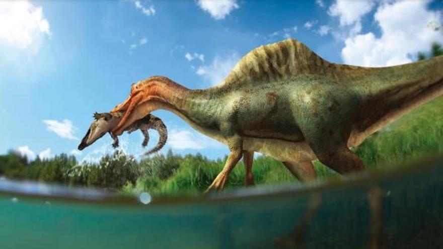 Descubren la primera especie de dinosaurio espinosaurio en la Península en Vallibona
