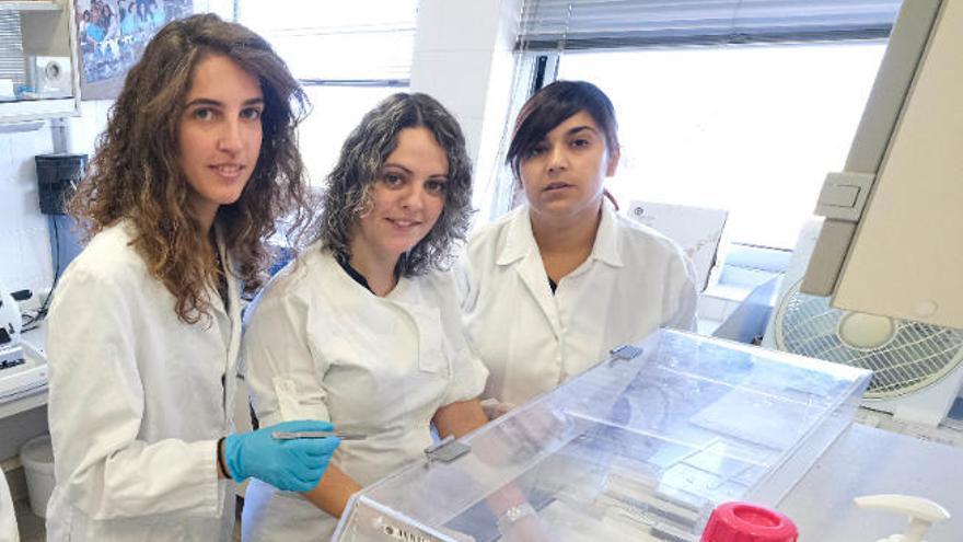 Una científica de la ULPGC obtiene la beca Marie Curie