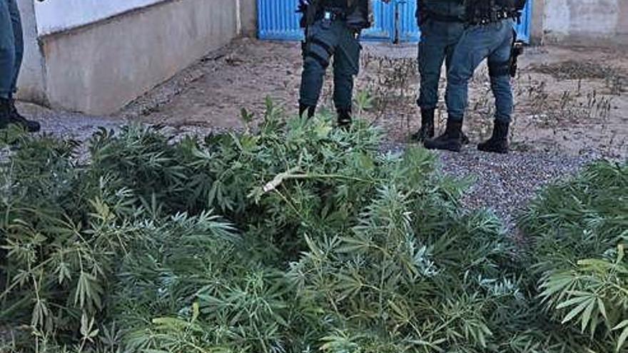 Sustancias incautada por la Guardia Civil.