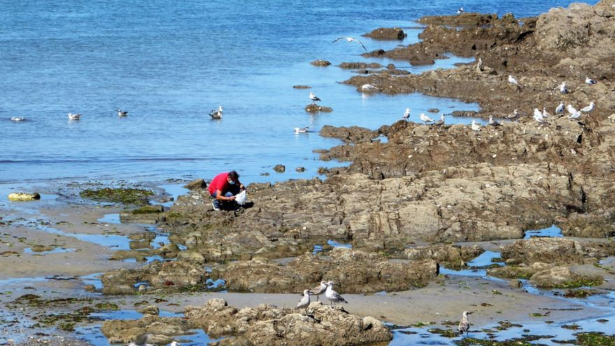 """""""Si la población de gaviota baja un 70% en diez años puede ser un aviso de salud ambiental"""""""