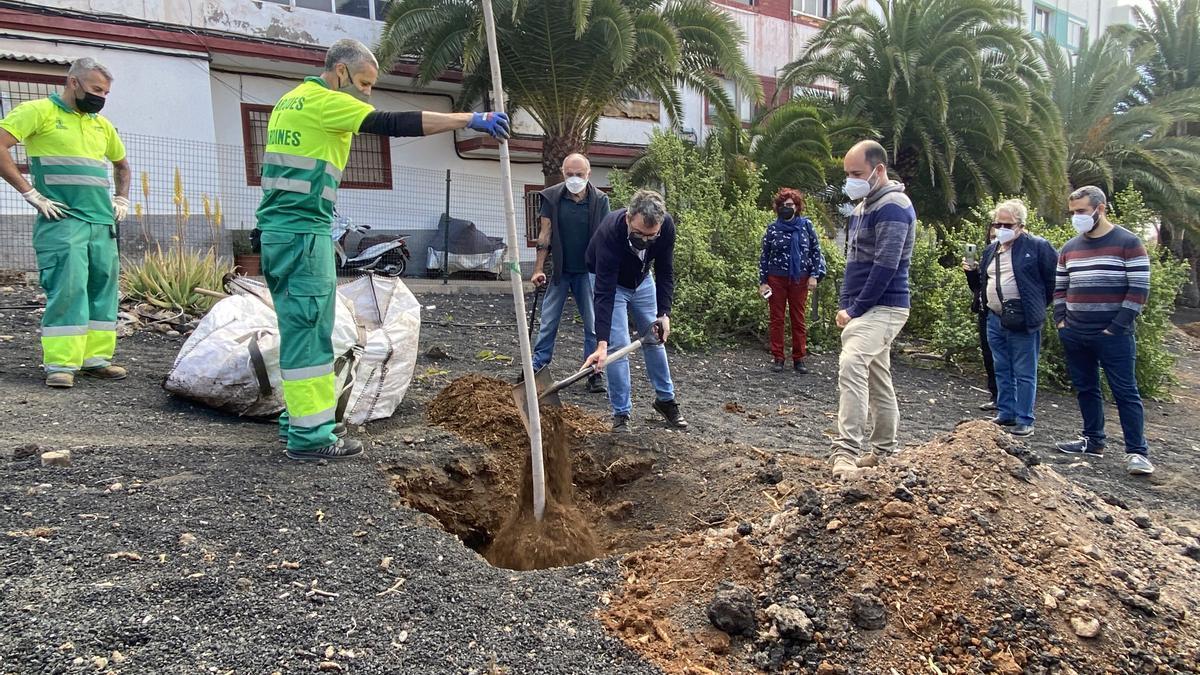 Nuevos árboles para el barrio de La Isleta