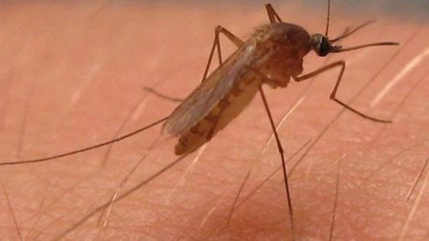 El brote de virus del Nilo en Andalucía llega a 35 afectados