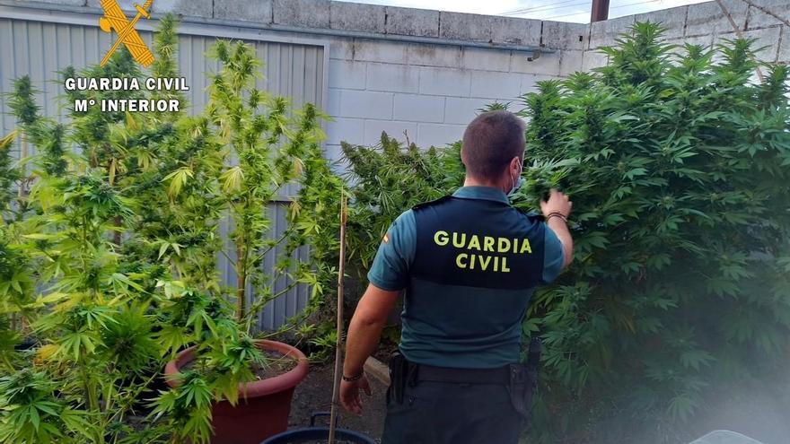 La Guardia Civil pone coto al tráfico y cultivo de drogas