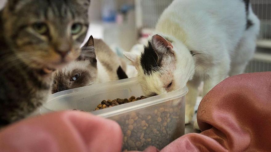 10.000 euros para apoyar la recogida y cuidado de animales abandonados