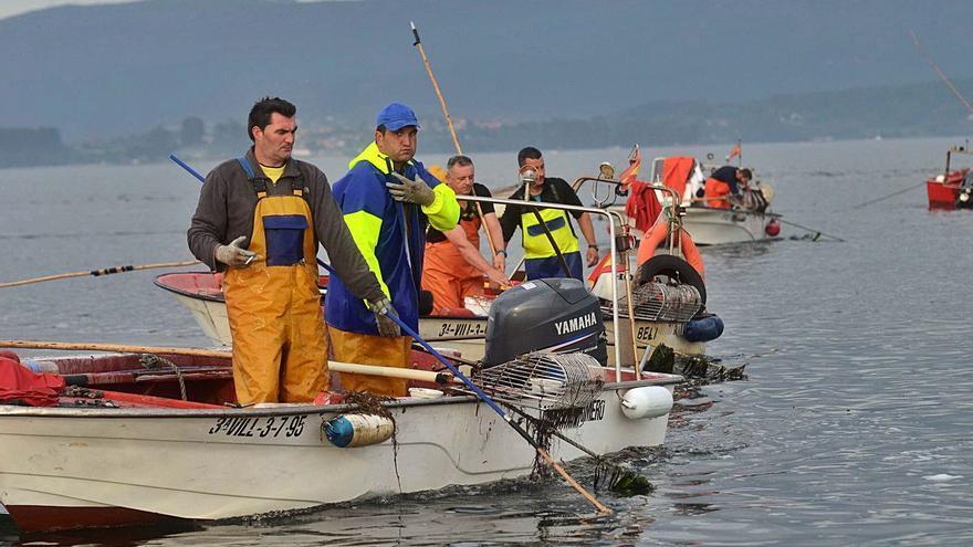 Os Lombos sigue sin recuperarse y ofrece perspectivas nefastas para el libre marisqueo