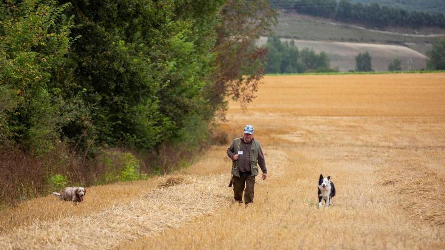 UPA de Castilla y León reclama que la caza sea declarada actividad esencial