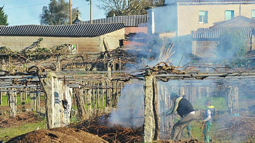 Los viticultores retoman la eliminación de restos de poda