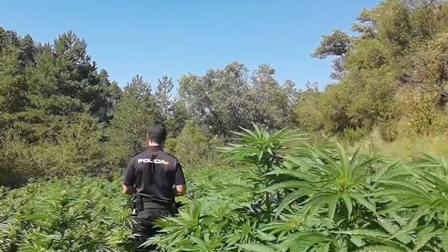 Agricultores locales vigilaban las macroplantaciones de marihuana descubiertas en Huesca