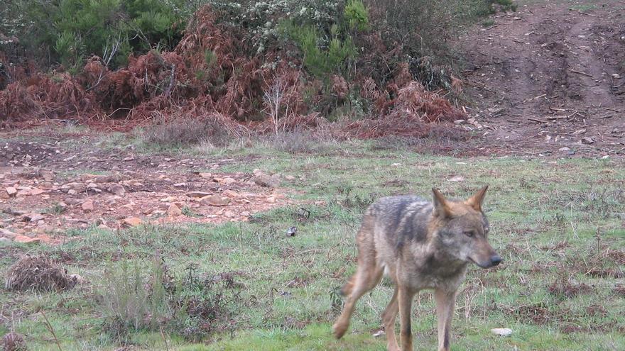 """UPA pide al Gobierno """"prudencia"""" ante las pretensiones de blindar al lobo"""