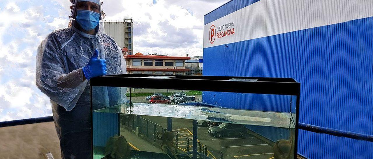 Pulpos de Nueva Pescanova criados en cautividad, en la sede central de la multinacional gallega.