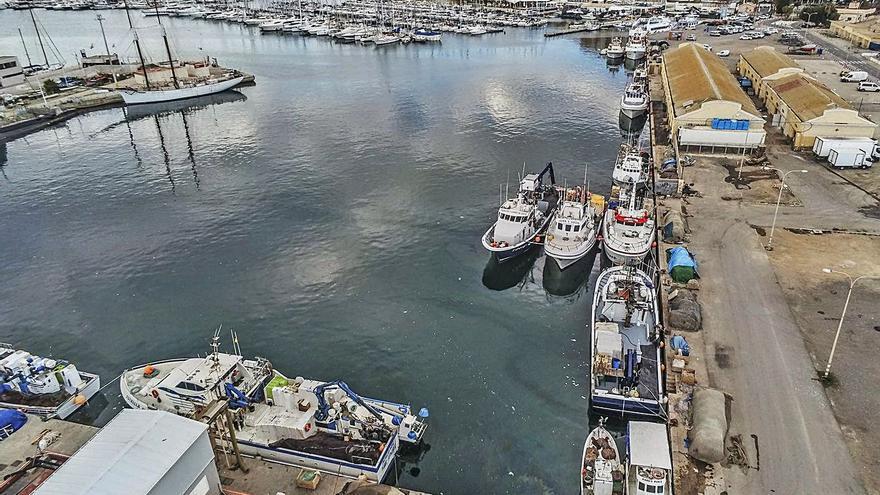 El Consell descarta la lonja de Torrevieja en la nueva zona de ocio del puerto
