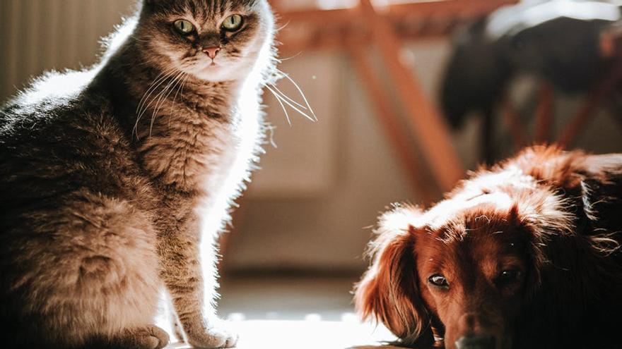 ¿Tienes perro o gato en casa? Este es el documento obligatorio que necesitarás el año que viene