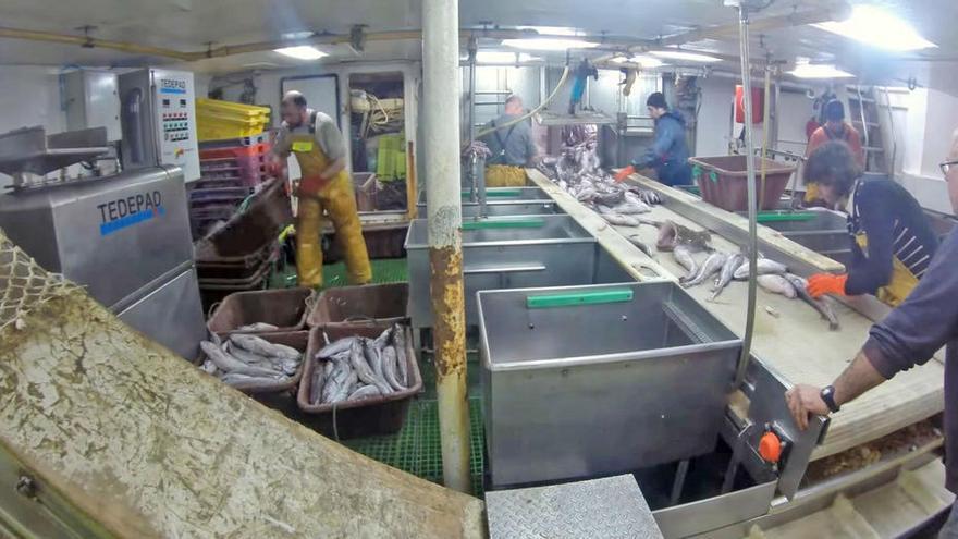 La flota de Vigo clasificará las vísceras de pescado a bordo para sacarles más partido