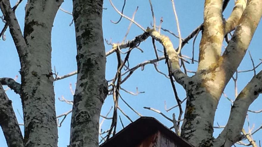 Palafrugell disposa de 24 caixes niu per a ocells i ratpenats