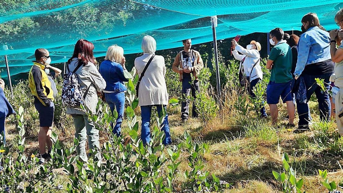 Participantes en la jornada de prácticas agrícolas conocen la finca de Robledo.   A. S.