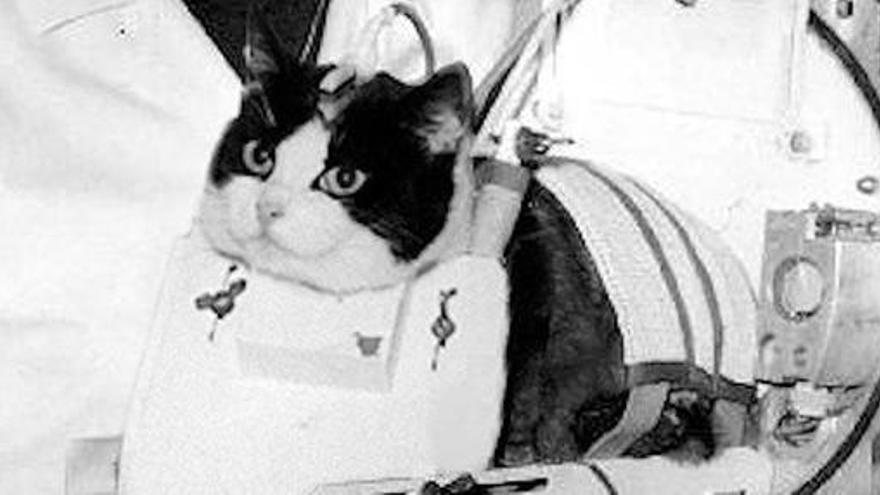 Una estatua en París para el único gato que fue al espacio