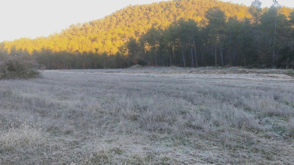 Cardona. El sol s'aixecava i el terra seguia ben gelat