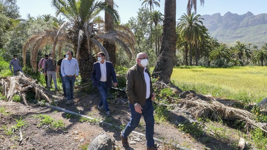 Limpieza de cañas de 6.700 palmeras y decenas de barrancos para frenar los incendios