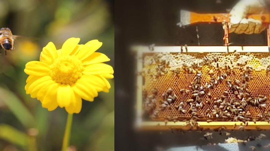 Bodega Granbazán, biodiversidad desde la colmena